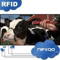 Mdt0031 maiale mucca pecora 134.2 kHz 125 khz rfid marchi auricolari per le pecore