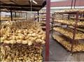 De aire- secado variedad de jengibre común y tipo de cultivo común de aire seco de jengibre