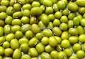 2014 nouvelle récolte de haricots mungo vert pour la cuisson