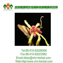 2014 best quality of witch hazel extract 10:1 20:1 30:1