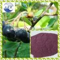 Antocianósidos acai berry extracto/acai baya p. E./acai berry en polvo