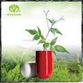 gmp moyeam chino natural de polifenoles de té de la cápsula