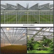4mm winter garden for Flower/ Garden Room with CE certificate