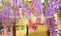 Artificiale cinese glicine fiore per il commercio all'ingrosso di fiori a buon mercato