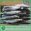 chinês de produtos por atacado nome científico de peixe cavala