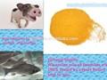 Type de grain et de maïs farine de gluten de haute protéines, variété d'aliments pour animaux