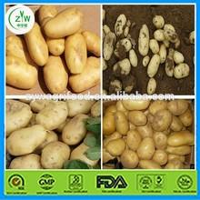 Las patatas a granel proveedor en china/fresca de color amarillo de papa para la venta