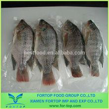 Frozen Tilapia Whole Round / Frozen Fish