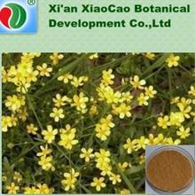 high quality Radix Ranunculi Ternati,Ranunculus ternatus Thunb.,Radix Ranunculus Teranti with best price