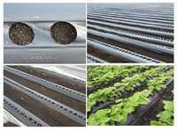 black/silver or black/white mulch film for agriculture