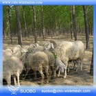 Farm Guard Field Fence Galvanized Sheep Fence Rabbit Fence