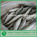 atacado preço baixo de alta qualidade de produtos do mar congelados