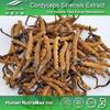 Chinese caterpillar fungus Extract Powder/Chinese caterpillar fungus Extract