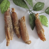 red ginseng root ginseng plant for sale