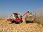 "15"" row spacin Grain combine harvesting machine for maize"