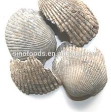 crude medicine health medicine blood clam