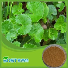 china manufacturer 2015 new products centella asiatica herb powder