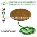 Kosher fábrica certificada, Folha lotus extrato nuciferina 5%, Redução lipídios do sangue