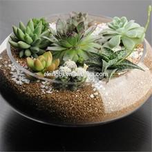 terrarium plants glass bowl ML202