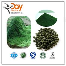 Hot selling Spirulina Extract Powder Factory