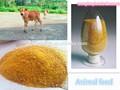 Natrual de gluten de maïs repas 9-0-0/protéine de maïs jaune en poudre/60% d'aliments pour animaux