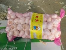 10kg mesh bag , size 5.0 purel white fresh natural garlic price