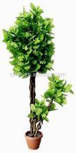 high quality bonsai plants for wholesale