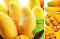 bv oferta fabricante preço do competidor qualidade superior mangiferina mango extrato de folhas