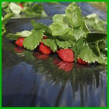 black mulching film for strawberries