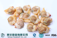 Fishing Seafood White Clam Vacuumied Seafood Supplier