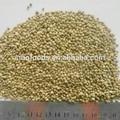 sementes de cânhamo seco sementes nome botânico de sementes