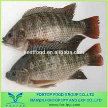 Black Frozen Tilapia Fish low price