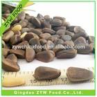 Bulk Raw Pine Nuts Price/ China Wild Pine nut seeds
