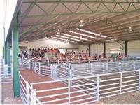 Steel galvanized livestock panles for lamb / sheep / goat