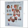 3d medizinische diagramm, medizinische poster