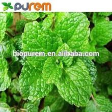 Peppermint Extract Powder, Menthol/Mint brain 5% 10% HPLC