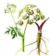 GMP 100% natural HPLC Angelica root herb Extract herbal medicine