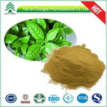 GMP 100% natural HPLC Isatis indigotica Fort