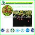 100% orgánico natural común flor hoja de hierba