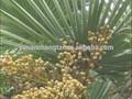 Gmp fuente de la fábrica de alta calidad pura la palma enana americana extracto Serenoa repens