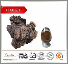 High Quality Chaga Extract 20% Polysaccharides Powder/Chaga Mushroom Extract in Bulk