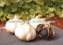 BV factory supply Black Garlic extract powder