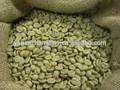 Gmp belgeli üretici kaynağı sıcak satış organik yeşil kahve çekirdeği s. E.