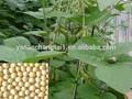 Bv suply fábrica de soja p. E.