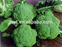 2013 new crop Frozen broccoli, IQF broccoli, frozen vegetables