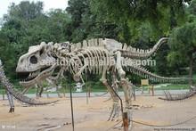 Replica artificial dinosaur fossils large dinosaur bones, High Simulation, Dinosaur Skeleton