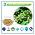 gmp sertifikası popüler bitkisel yeşil kahve çekirdeği fiyatı