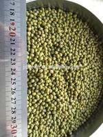 Green Mung Bean,2014 crop,different size