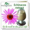 echinacea sementes para venda a partir de echinacea sementes de echinacea purpurea sementes