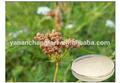100% diosgenine cnidium monnieri extrait pur et naturel